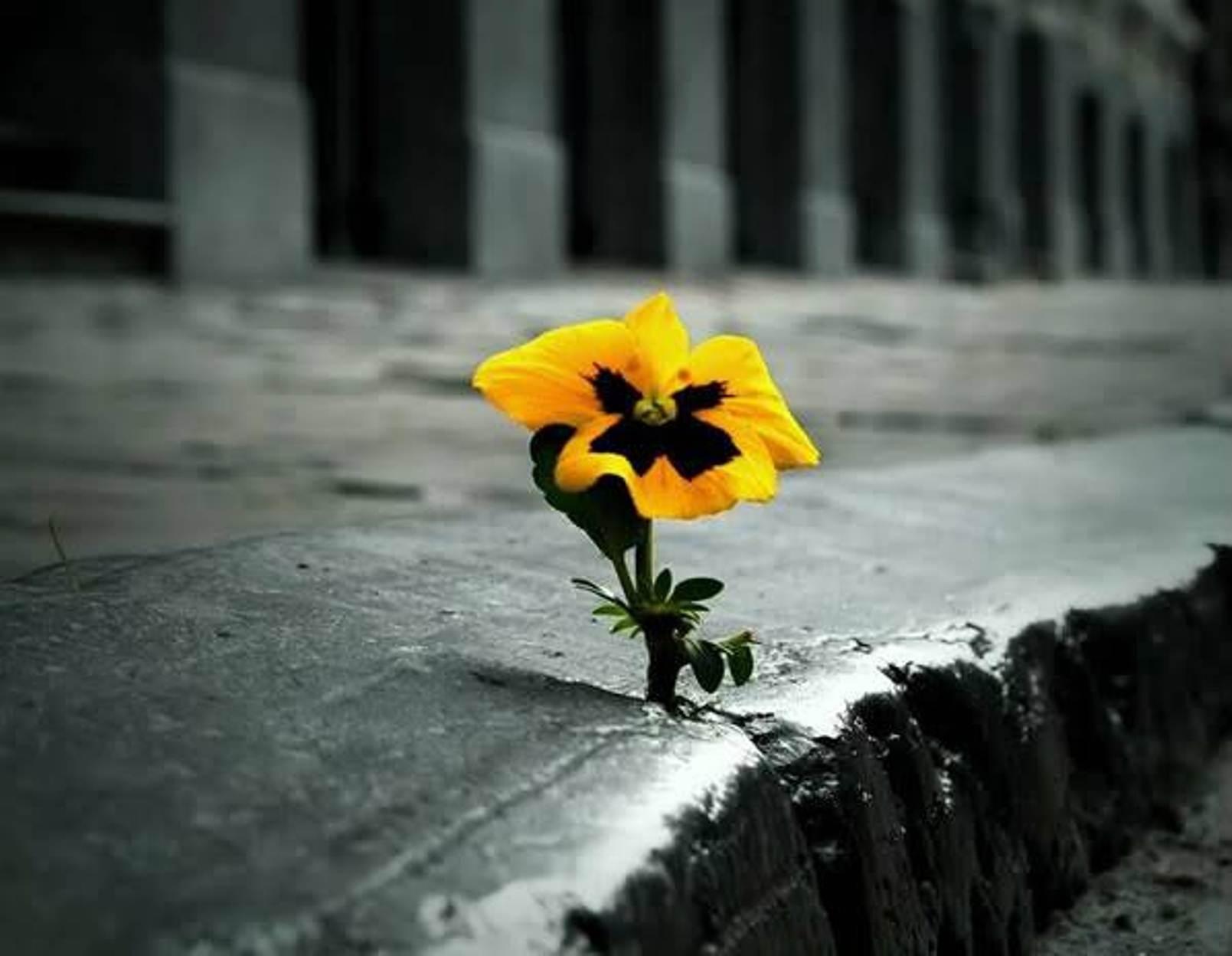 Il guerriero della luce crede. Poiché crede nei miracoli, i miracoli cominciano ad accadere.
