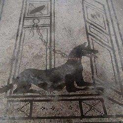 Un'immagine antica che raffigura un cane