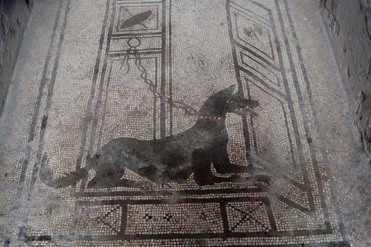 Il cane nella storia riferimenti al migliore amico dell for Cane nella cabina dell aereo