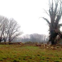 Gli alberi tagliati