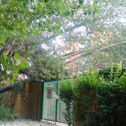 L'albero che si è appoggiato al muro di cinta