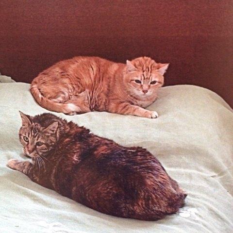 Le due gatte che cercano casa
