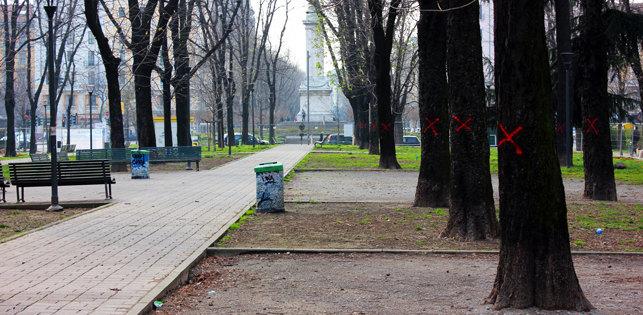 Alberi in piazza Tricolore