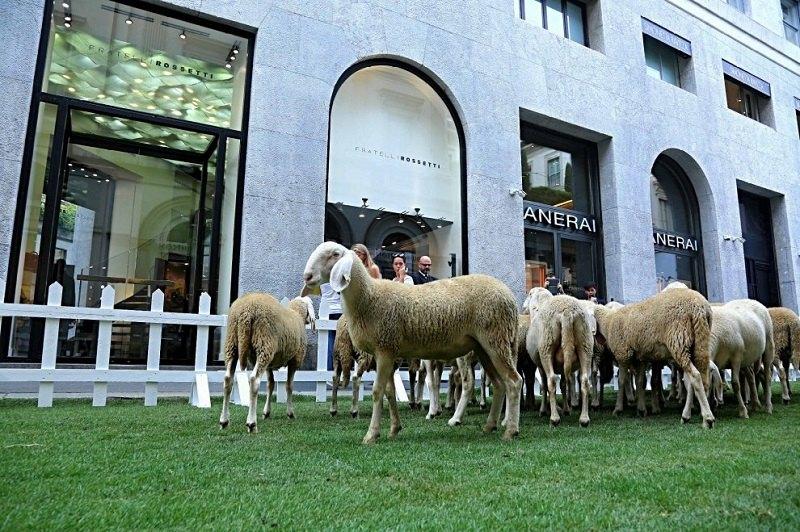 Le pecore nella via della moda milanese