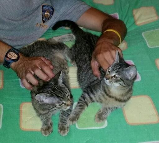 I gattini Nega e Posi