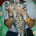 I gatti in coppia