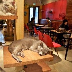I Cat Cafè, una moda orientale che ha conquistato il mondo