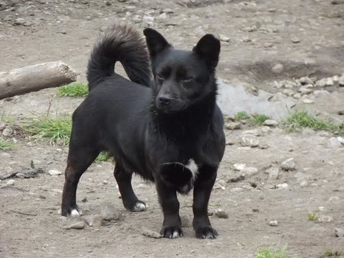 Corner, un cagnolino nero che ama giocare