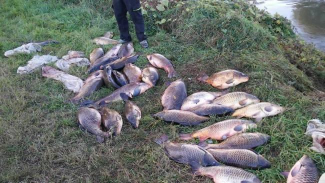 I pesci morti abbandonati a San Zenone