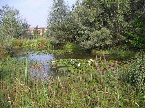 Il Bosco di Montorfano, oasi Wwf di Melegnano
