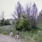 prostitute sulla Strada Provinciale Binasco-Melegnano
