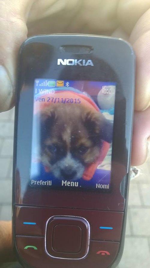 Al Clochard non è rimasta che la foto del cucciolo sul suo celliulare