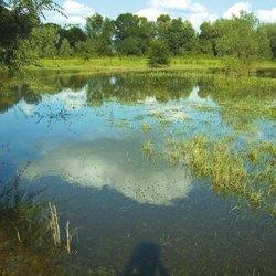 L'oasi Levadina , nei pressi dell'area