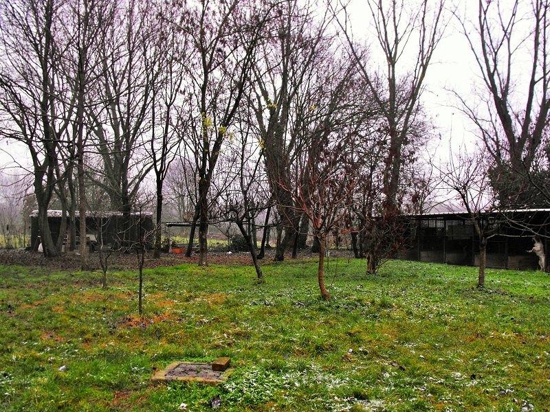 Il rifugio per cani da caccia che il 18 aprile verrà chiuso