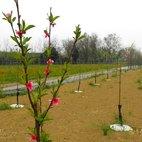 Alcuni dei 400 alberi da frutto piantati