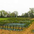 Le geometrie di bossi e fiori che costituiranno i giardini all'italiana