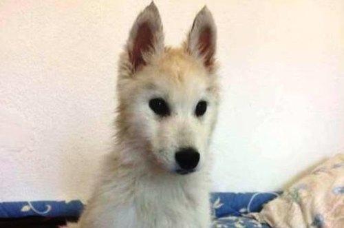 Il cucciolo rubato e poi ritrovato
