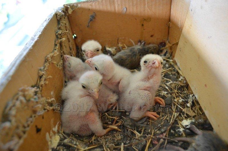 Dopo la nascita sono rimasti in cinque, uno non ce l'ha fatta