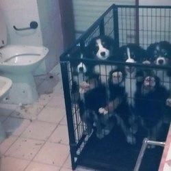 I cuccioli recuperati dalla Polizia Locale