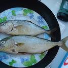 A pranzo con il pescato