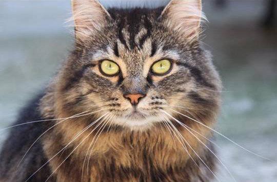 La Terza Età Dei Nostri Amici Gatti Come Affrontarla Al Meglio
