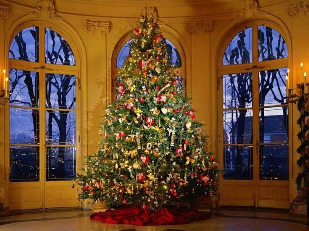 Albero Di Natale Grande.Peschiera San Bovio Vi Aspetta Per Addobbare L Albero Di Natale Eventi 7giorni