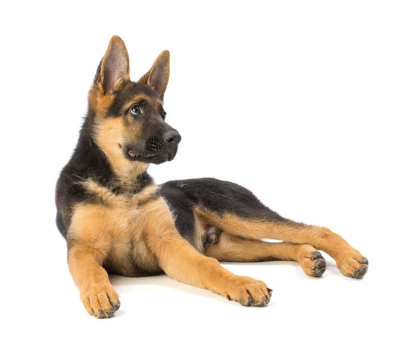 Qualche Mito Da Sfatare Sui Nostri Inseparabili Amici Cani Amici