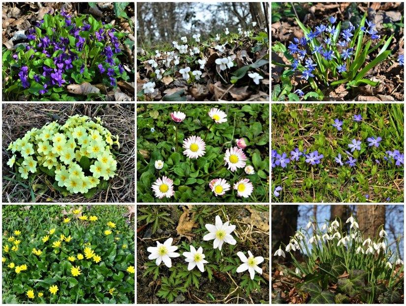 Fiore Giallo 6 Petali.Numerosi Sono I Fiori Invernali Spontanei Che Possiamo Vedere