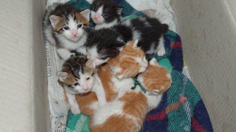 Molto Cosa fare se troviamo gattini neonati abbandonati - Amici animali TP31